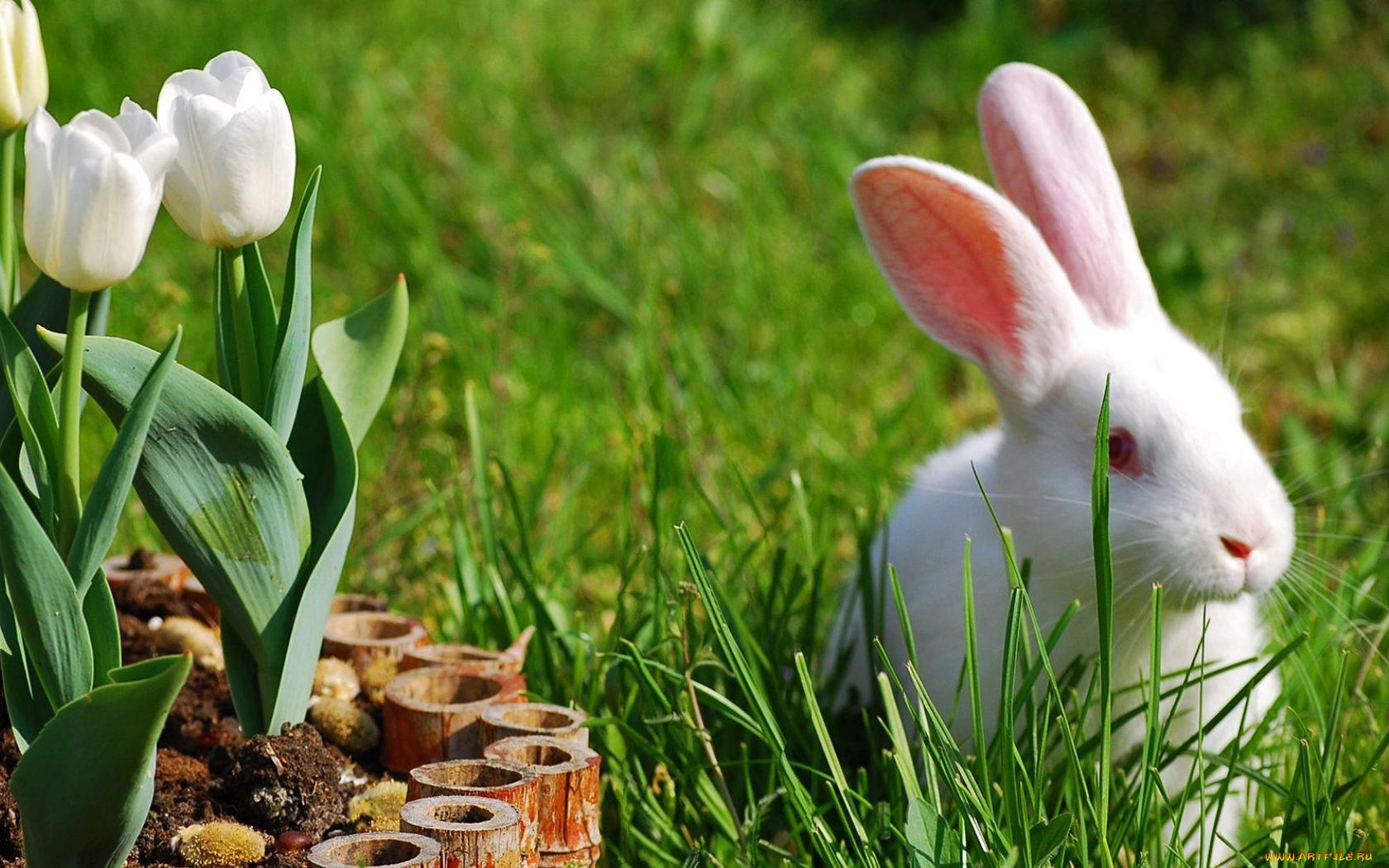 Обои на рабочий стол весна животные и природа